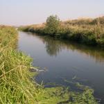 річка Солонія